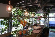 SHOP | SOLSO architectural plant & farm