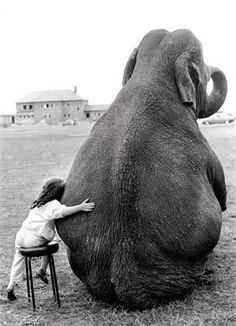 I want to hug an elephant one day. biggest dream ever.