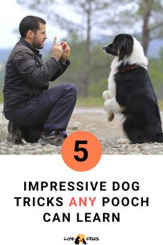 Make your pooch the star of the dog park with these 5 impressive, yet easy dog tricks he will pick up in no time. Baby Dogs, Dogs And Puppies, Teach Dog Tricks, Tricks For Dogs, Cool Dog Tricks, Funny Dogs, Cute Dogs, Dog Commands, Dog Hacks