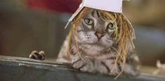 """Monty the tabby cat from """"Stuart Little """" Stuart Little, Cat Hat, In Ancient Times, Dog Names, Classic Movies, Disney Pixar, Thriller, Cats And Kittens, Animation"""