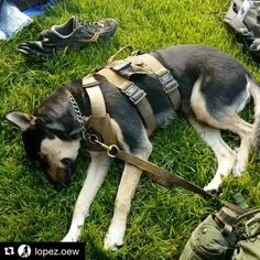 It's an honor and privilege to make purpose driven gear for those who have sacrificed so much for the freedoms we enjoy. (ft. Tracking Harness and Custom Lead in Coyote) #honorthefallen #veterans #modernicon #purposedriven  #practicalnottacticool 🎥 @lopez.oew #Repost ・・・ 23 miles down, 37 to go on our journey to Arlington National Cemetery to honor those who paid the ultimate price #honoringtheirsacrifice  #rucktoremember  #memorialdayweekend  #cadirahero  #operationenduringwarrior #LTZOE…