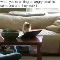 Thirty-Two Feline Good Caturday Memes - World's largest collection of cat memes and other animals Animal Antics, Animal Jokes, Funny Animal Memes, Funny Cat Videos, Funny Animal Pictures, Cat Memes, Humor Videos, Funny Humor, Funny Cute Cats
