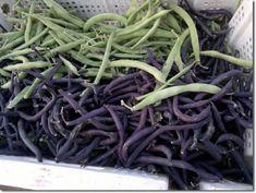 urban desert gardening | jordan | beans