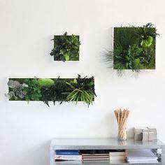 Green MONOQI   Design your Life.