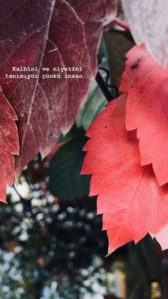 (notitle) - Fatime Zehra - #Fatime #notitle #ZEHRA Arabic Love Quotes, Instagram Story, Love Words, Book Quotes, Iphone Wallpaper, Literature, Plant Leaves, Lyrics, Wallpaper S
