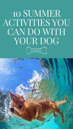 10 Summer Activities You Can Do With Your Dog | Dog Care Tips | Dog Behavior | Dog Activities |
