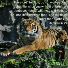 'Therefore I tell you, do not worry about your life, what you will eat or drink; or about your body, what you will wear. Is not life more than food, and the body more than clothes?  Matthew 6:25 NIVUK