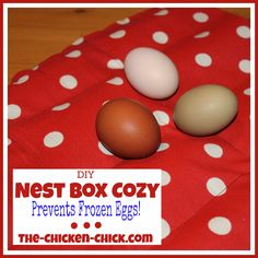 When winter temperatures plummet, frozen eggs are usually not a chicken keeper's primary concern, but once the coops are shored up and the chickens are protected from the elements, egg preservation and safety become significant issues. Best Chicken Coop, Chicken Chick, Fresh Chicken, Chicken Runs, Chicken Coops, Farm Chicken, Chicken Tractors, Keeping Chickens, Raising Chickens