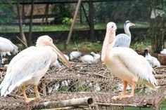 Nandankanan Zoological Par, Bhubaneswar, India — by Sukanta Maity. Nandankanan Zoological Park is a 400-hectare (990-acre) zoo and botanical garden in Bhubaneswar, Odisha, India....