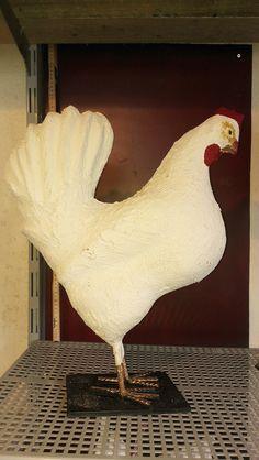 Høne i makemake,  cement og jern. Have dekoration, have design se mere på https://www.facebook.com/groups/art.visten/?fref=ts#  direkte salg fra eget værksted. hønsehold, høns, hane, kyllinger, brune høns, hvide høns, bur, perlehøns, høne, maleri, rå, rådyr, buk, jagt, hejre, småfugle, måge, storm måge, hætte måge, kunsthåndværk, galleri, kunst, Art Visten, Løkken, Lønstrup, Hirtshals, Tornby, strand, skulptur, hare, kanin, LP, plade, kat, katte, killinger, kattemad,