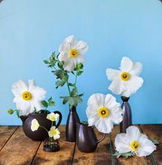poppies tulipina 10291234_806897539322080_7637685835016057340_n