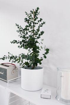 Idag blev jag sådär lagom lycklig. Jag har letat som en galning i flera månader efter en eucalyptus i kruka. Idag så gick jag förbi en när jag Exterior Design, Interior And Exterior, Indoor Flowers, Beautiful Interior Design, Dream House Plans, Green Plants, Home Look, Interior Inspiration, Sweet Home