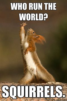 Who Run the World? Squirrels!