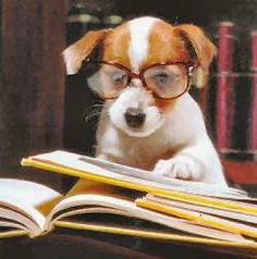 read (why am I being haunted by jack russell terriers? Chien Jack Russel, Jack Russell Terrier, Cute Puppies, Cute Dogs, Dogs And Puppies, Doggies, Baby Animals, Funny Animals, Cute Animals