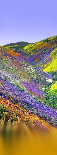 The Valley of Flowers National Park, The Himalayas, India
