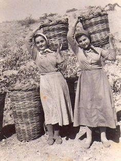 Τιμή στους αγρότες και τις αγρότισσες | Πρώτη Καθημερινή Εφημερίδα της Ηλείας, νέα από την Ηλεία Malta History, Greek History, Old Pictures, Old Photos, Vintage Photos, Greece Photography, History Of Photography, Films Western, Cyprus Holiday