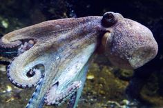 WATCH: Camouflaging Octopus Saves Itself From Shark