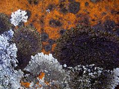 Competing Lichens Growing on a Rock