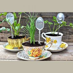 a cute gift for a foodie or green thumb...Des plantes dans des tasses à thé - Marie Claire Idées