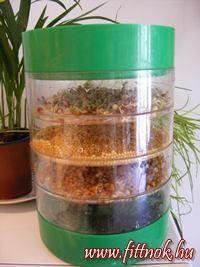 csiraztatasotthon Edible Plants, Health And Beauty, Paleo, Jar, House Design, Smoothie, Fitness, Beach Wrap, Smoothies