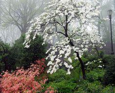 Flowering trees and shrubs Dogwood Trees, Flowering Trees, Trees And Shrubs, Trees To Plant, All Nature, Flowers Nature, Shade Flowers, Autumn Nature, Beautiful Gardens
