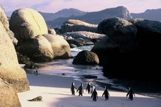 Penguins on Boulders Beach, Cape Town, South Africa. been there, special memories South Africa Holidays, Cape Town South Africa, Cape Town Tourism, Boulder Beach, Most Beautiful Beaches, Beautiful Places, Beautiful Pictures, Africa Travel, Dream Vacations
