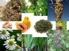 9 Ervas Poderosas Que Te Vão Ajudar A Limpar O Organismo, A Perder Peso, E A Prevenir E Melhorar A Tua Saúde Em Geral