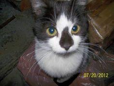 My old cat 'Falafel' back when he was a baby kitten.