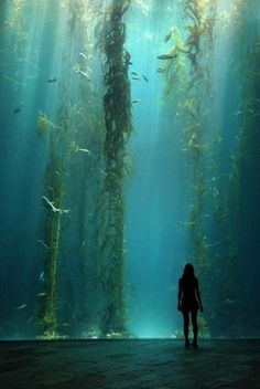 """Kelp Forest"" (Enormous kelp forest tank at the National Museum of Marine Bi. ""Kelp Forest"" (Enormous kelp forest tank at the National Museum of Marine Biology and Aquarium in Kenting, Taiwan) Kelp Forest, Forest Art, Magical Forest, Beautiful Forest, Dark Forest, Marine Biology, Underwater World, Underwater Caves, Underwater Photography"