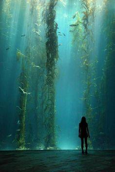 """Kelp Forest"" (Enormous kelp forest tank at the National Museum of Marine Bi. ""Kelp Forest"" (Enormous kelp forest tank at the National Museum of Marine Biology and Aquarium in Kenting, Taiwan) Kelp Forest, Forest Art, Magical Forest, Dark Forest, Marine Biology, Underwater World, Underwater Caves, Underwater Photos, Fantasy Landscape"