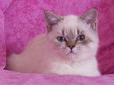 Votez pour Heuzebus sur www.zoomalia.com/photomalia #concours #contest #cat #animaux #zoomalia
