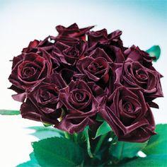 black baccara roses  Love this!  DC