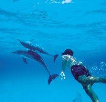 I wanna swim with dolphins so bad :(