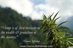 Hemp quote from Thomas Jefferson #wisdom we need to learn from our fore fathers! #hemp #cannabis