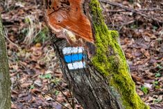spring photos on walk - trail mark Spring Photos, Turquoise Necklace, Trail, Photography, Outdoor, Fotografie, Photograph, Teal Necklace, Photo Shoot