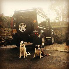 Guard dogs #dogsofinstagram #colliesofinstagram #collie #collies #defender #defender90 #landrover #landroverdefender #4x4 by scott.garrow Guard dogs #dogsofinstagram #colliesofinstagram #collie #collies #defender #defender90 #landrover #landroverdefender #4x4