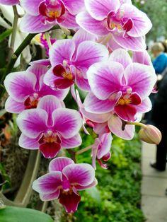 sch ne zimmerpflanzen orchidee beruetung orchideen arten pflanzenideen pinterest dekoration. Black Bedroom Furniture Sets. Home Design Ideas