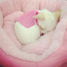 Snuggled in pink