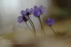 Following the spring by oagerasimova. @go4fotos