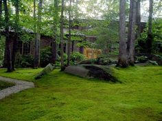 Moss Is Boss! Roll Out the Green Carpet | How would you like a lawn that stays green all year, looks beautiful, grows on poor soil, is native to your area, and needs hardly any s...