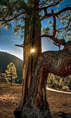 Landscape - Sunrise through the trunk at Sunrise Crater lava fields in Arizona. - photographer Richard Michael Lingo