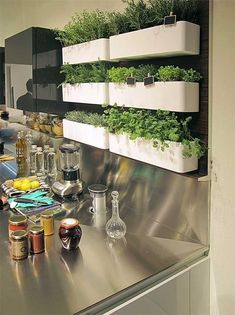 Kitchen with live herbs.
