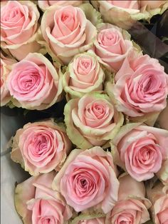 Rose - Sweet Dolomiti. Sold in bunches of 20 stems from the Flowermonger the wholesale floral home delivery service.