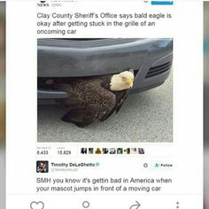 """The eagle looks so annoyed, like """"WHAT IS THIS STUPID CAR DOING HERE? THIS IS MY TERRITORY!"""