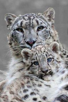 chats sauvages, la vie des chats sauvages