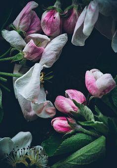 Blossom by Call me cupcake, via Flickr