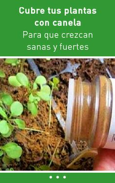 Cubre tus plantas con canela para que crezcan sanas y fuertes