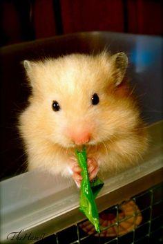 Hamster World !!