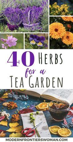 Nothing is like a hot mug of tea to cure exactly what ails you! Herb landscapes are an incredible resource for making herbal tea plus medicines at home. Purchasing bulk herbs can become quite expensive, whereas . Healing Herbs, Medicinal Plants, Making Herbal Tea, Homemade Tea, Growing Herbs, Growing Tea, Tea Blends, My Secret Garden, Edible Flowers