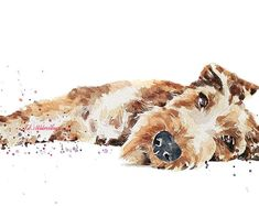 "Irish Terrier - passed out"" Print Watercolour A3 (30*40cm/16*12 Inches)"